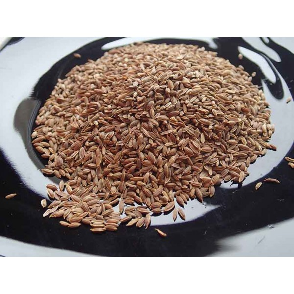 Копър семена (Fructus Anethi) 20 гр.